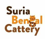Quality Bengal for sales