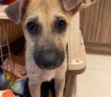 Rescue dog for adoption