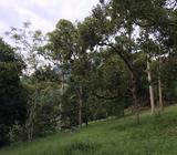 Tanah Durian IOI D24 Nilai dekat Lenggeng Seremban