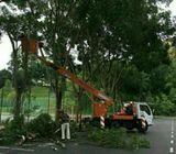 Cut Tree/ Tebang pokok